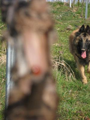 Die Hunde sind natürlich auch dabei und dürfen sich um die Stöcke und Mäuselöcher kümmern ;)