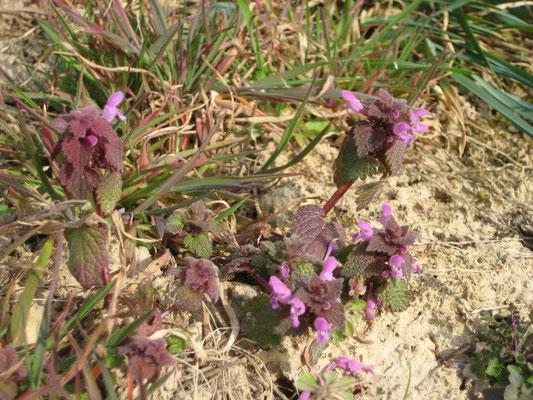 Auch die ersten Blüten strecken die Köpfe. Wer erkennt diese Blüten?