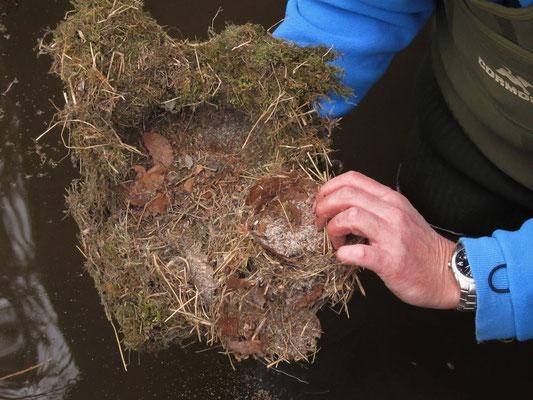 Nest einer Gebirgsstelze, Foto: NABU Ellwangen/Petra Blöchle