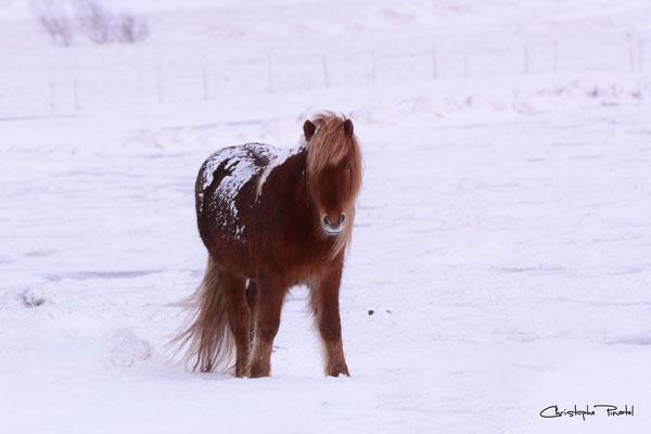 Photo 1 - Sérénité équine