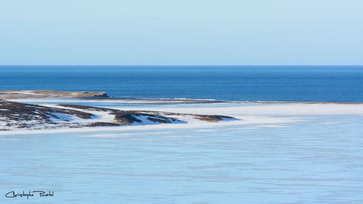 Photo 7 - Les bleu polaires