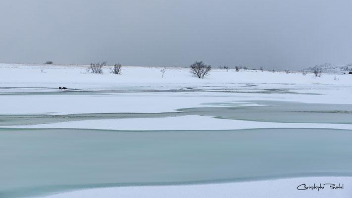 Photo 13 - Sage paysage