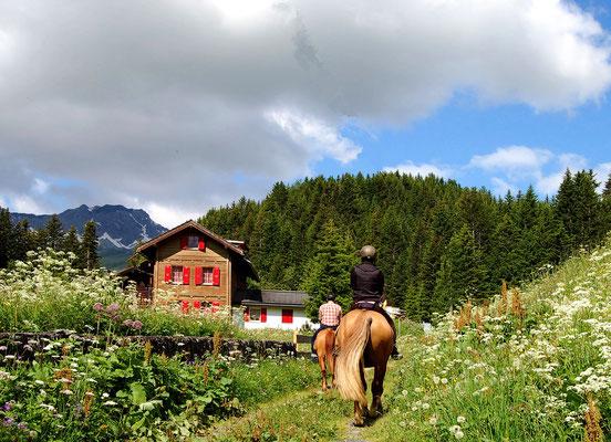 Reiferien im Jura oder in den Alpen