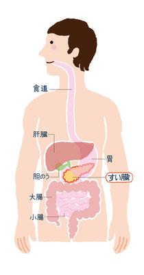 【ムック/2014】「NHKチョイス@病気になったとき Vol.2」(主婦の友社)本文イラスト