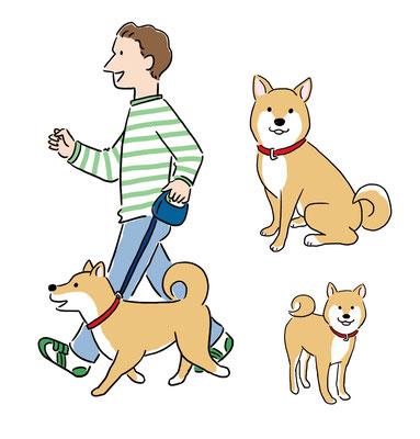 【冊子/2020】日本犬保存会 会誌「日本犬」