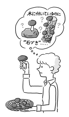 【テキスト/2014】「技術・家庭科用 家庭分野 言葉の解説集①食生活編」(東京書籍)本文イラスト