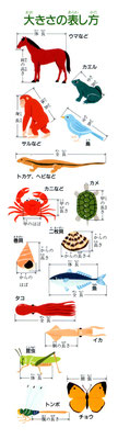 【図鑑】「生き物探検大図鑑」(小学館)図鑑の使い方説明イラスト