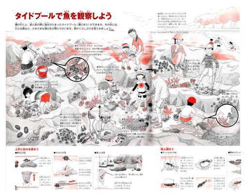 【図鑑】「小学館の図鑑NEOシリーズ『魚』」(小学館)本文イラスト