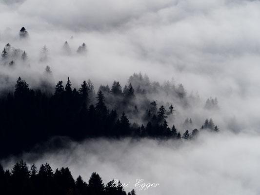 Nebelmeer im Churer Rheintal