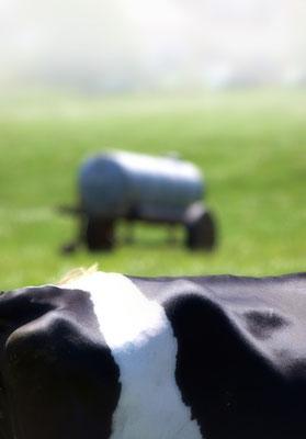 Für Bodenleder kommen erstklassige, makellose Häute in Frage. Kuhhäute verfügen über die engste und dichteste Faserstruktur mit den feinsten Fibrillen. Ochsen-und Bullenhäute weisen für die Produktion von Bodenleder eine zu grobe und lose Hautfaser