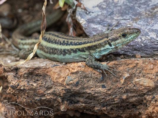 Female with uncommon bluish color