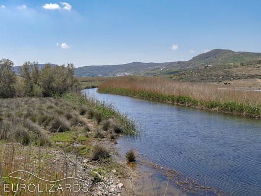 Grass snake habitat – without Grass snakes