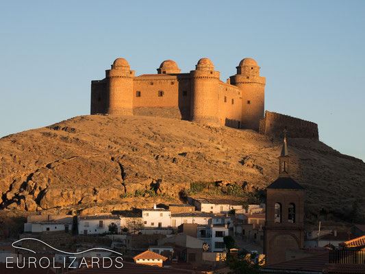 The Castillo de La Calahorra at the northern slopes of Sierra Nevada: home of the southernmost population of Podarcis liolepis (Catalonian Wall Lizard)