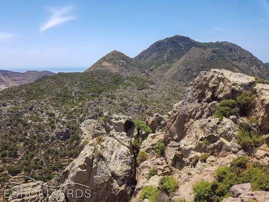 View to Profitis Ilias peak: potential habitat for Anatololacerta pelasgiana