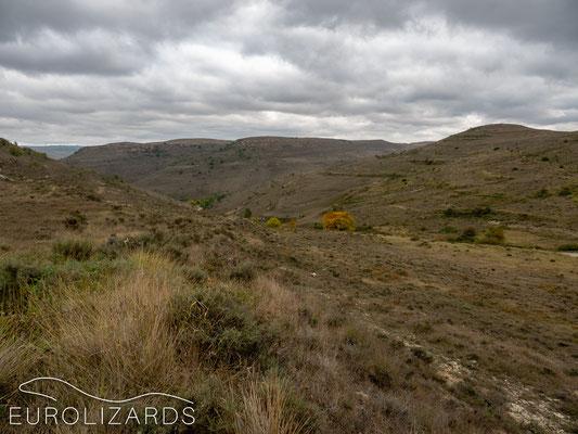 Near Burgos