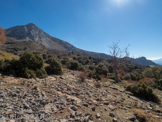 Peña de Jaén – A mountain like a classical oil painting