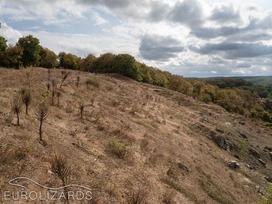 Dry habitat