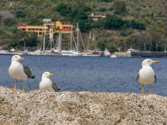 On Lipari: waiting for the ferry…
