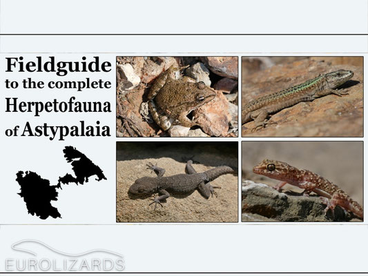 Now we had seen the complete Herpetofauna of Astypalaia – maybe we should write a field guide now? ;-)