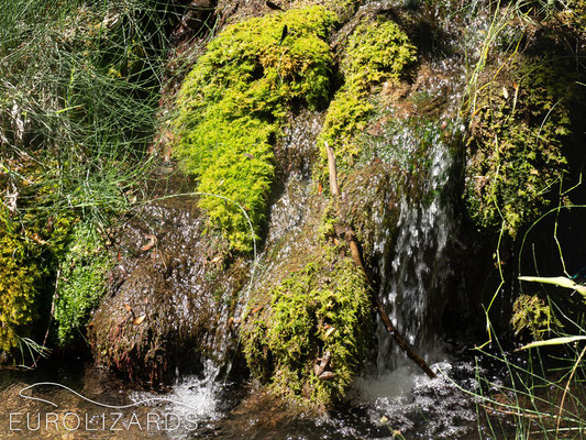 Running water in summer is rare, even in the Parnon mountains