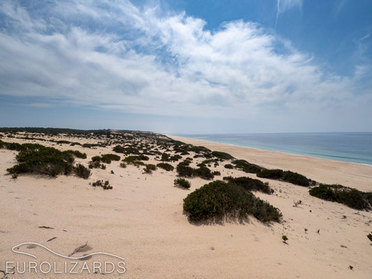 Solidified dunes - habitat of: