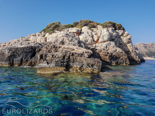 Psomi: the only so far known habitat of Anatololacerta finikensis in Greece