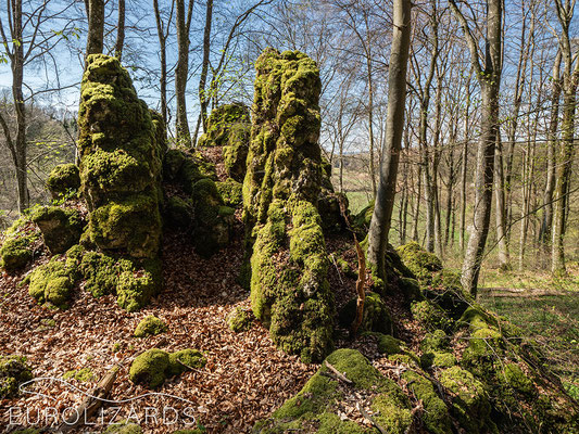 limestone rocks, overgrown with moss. Such habitats in light forests host a rich flora.