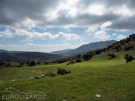 The lonely meadows of Argolis