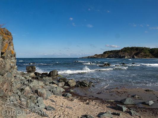 In Strandzha, Natrix tessellata can be observed fishing in the sea
