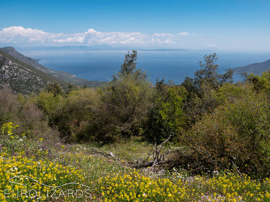 Habitat view a view.