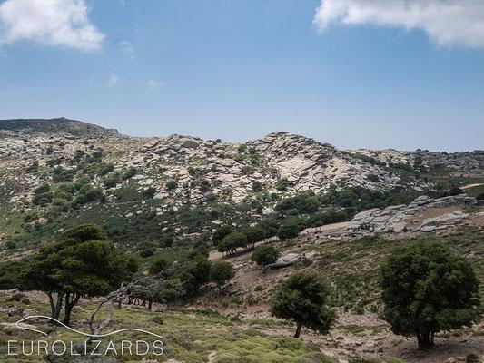 Wild Western Ikaria
