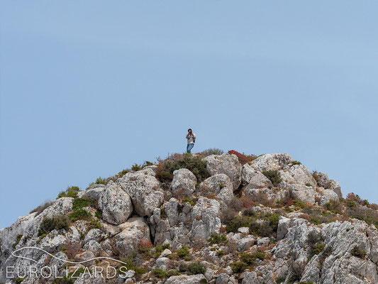 The scientist on top of the island