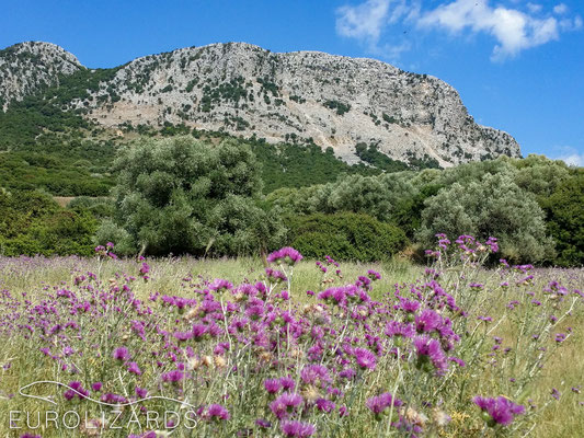 Peloponnese: Habitat in the Santameri Mountains