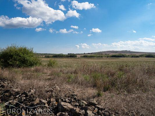 Reptile habitat in the Burgas plains