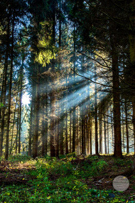 """Bild: Tannen-Wald Schwerte-Ergste, Schwerte, """"in den Tiefen des Waldes""""; www.2u-pictureworld.de"""