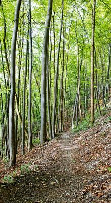 """Bild: Wald in der nähe von Burg Reußenstein, Baden-Württemberg, """"Waldsicht""""; www.2u-pictureworld.de"""