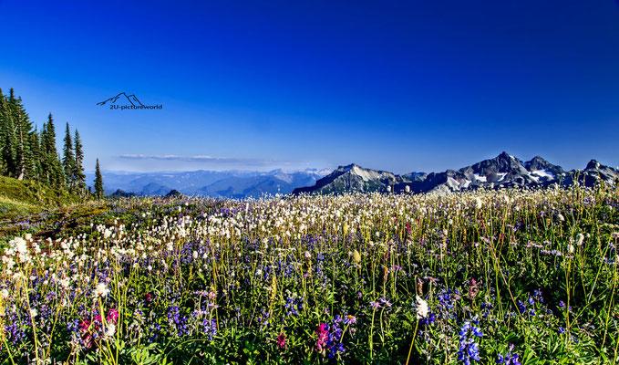 Bild: Bergblumenwiese, Mount Rainier NP