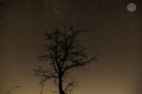 """Bild: Drüpplingsen nachts im November, """"Sternenbaum"""", www.2u-pictureworld.de"""