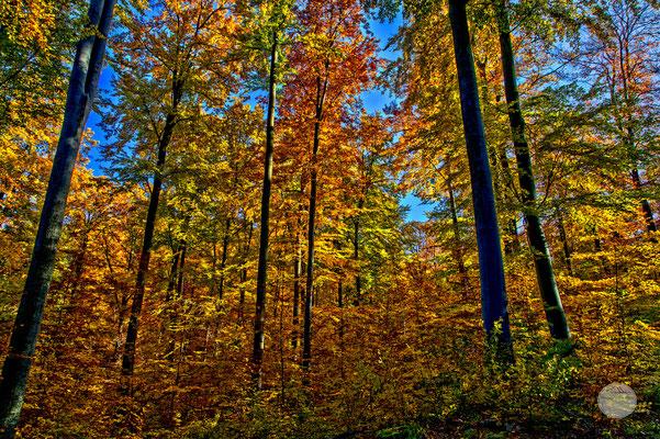 """Bild: Herbstwald in der Nähe von Schloss Solitude, Stuttgart, """"Lichterwald""""; www.2u-pictureworld.de"""