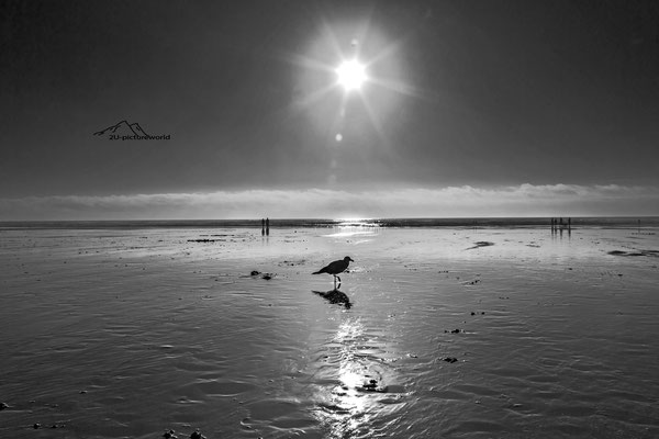 "Bild: Strand von Seaside im State Oregon, ""seagull at seaside"""