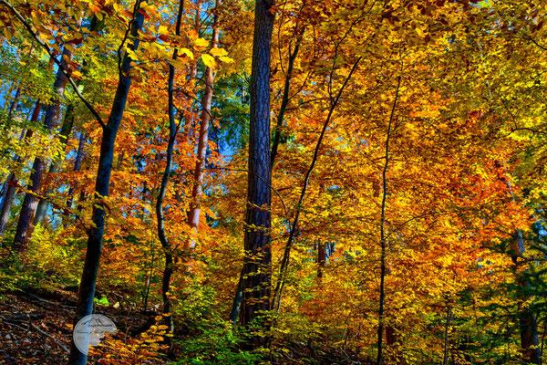 """Bild: Herbstwald in der Nähe von Schloss Solitude, Stuttgart, """"Farbenflut""""; www.2u-pictureworld.de"""