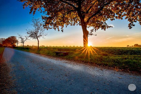 """Bild: letzte Sonnenstrahlen im Herbst in der Nähe des Möhnesees, Körbecke, """"Allerheiligen sunset""""; www.2u-pictureworld.de"""