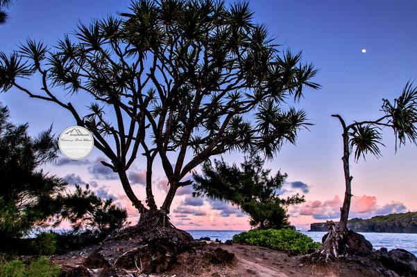 """Bild: """"der Mond ist aufgegangen_Palmenmond"""", Maui Nord-Ostküste"""
