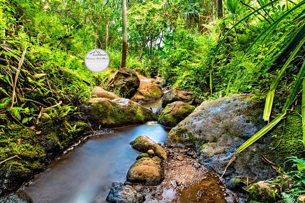 Bild: Wasserlauf im Regenwald an der Na Pali Coast, Kauai