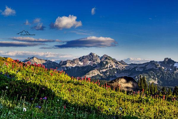 Bild: Mount Rainiet Nationalpark, abendliche Bergidylle