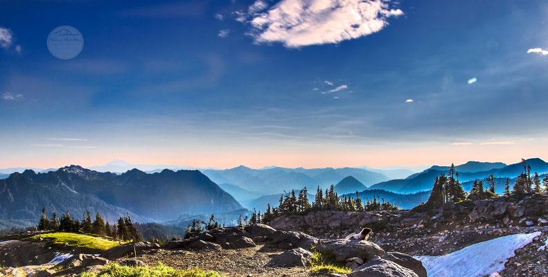 """Bild: Murmeltier im Abendlicht im Mount Rainier Nationalpark, """"im Rampenlicht""""; www.2u-pictureworld.de"""