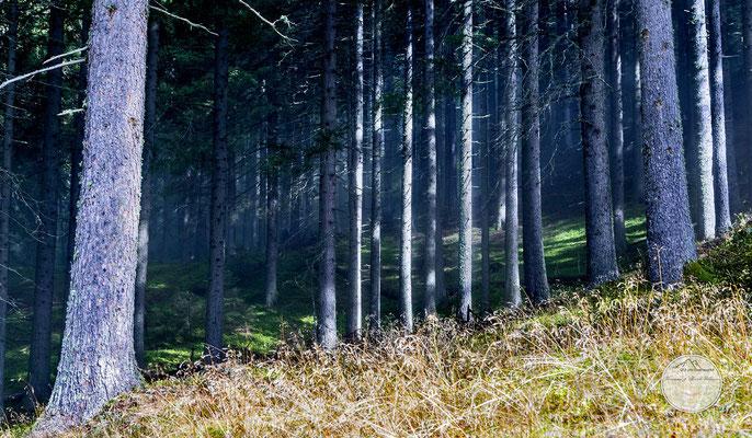 Bild: Wanderweg durch Walds zur Iffinger Huette in Suedtirol, www.2u-pictureworld.de