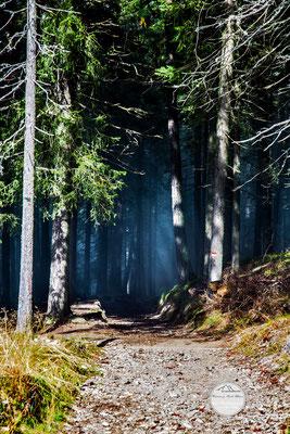 """Bild: Waldweg zur Iffinger Huette Suedtirol, """"Nebelwald"""", www.2u-pictureworld.de"""