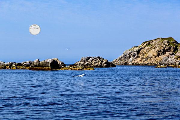 """Bild: Litloy, Nordland Nordmeer, Norwegen, """"Gleitflug"""", www.2u-pictureworld.de"""