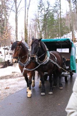 ノイシュバンシュタイン城門までの坂道は馬車の利用が楽ちん 結構高い